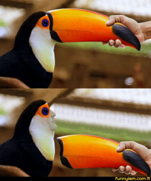 PoE Toucan was effectively removed from the game in 2019